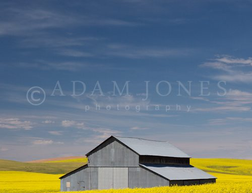 Palouse in Spring