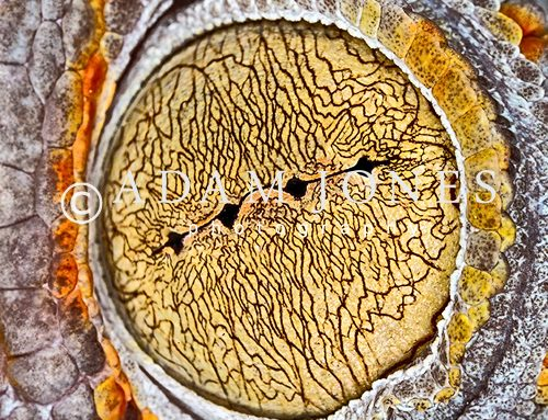 Extreme Macro Photography: Canon MP-E 65mm